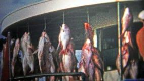 ΠΟΛΗ ΤΟΥ ΠΑΝΑΜΑ, ΗΠΑ - 1959: Το αλιευτικό σκάφος φόρτωσε επάνω με grouper τα ψάρια που κρεμούν έξω από τη βάρκα απόθεμα βίντεο
