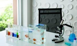 Πολλά από το εργαστήριο επιστήμης γυαλικών στην επιτραπέζια έννοια στο θόριο στοκ φωτογραφία με δικαίωμα ελεύθερης χρήσης