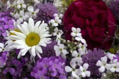 Πολλά διαφορετικά είδη λουλουδιών: πορφυρός και βιολέτα phlox, chamomile, κόκκινα peony, ρόδινα κουδούνια στοκ εικόνες με δικαίωμα ελεύθερης χρήσης