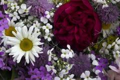 Πολλά διαφορετικά είδη λουλουδιών: πορφυρός και βιολέτα phlox, chamomile, κόκκινα peony, ρόδινα κουδούνια στοκ εικόνες