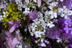 Πολλά διαφορετικά είδη λουλουδιών: πορφυρός και βιολέτα phlox, chamomile, κόκκινα peony, ρόδινα κουδούνια στοκ φωτογραφίες με δικαίωμα ελεύθερης χρήσης