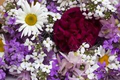 Πολλά διαφορετικά είδη λουλουδιών: πορφυρός και βιολέτα phlox, chamomMany διαφορετικά είδη λουλουδιών: πορφυρός και βιολέτα phlox στοκ φωτογραφίες με δικαίωμα ελεύθερης χρήσης