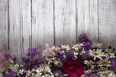 Πολλά διαφορετικά είδη λουλουδιών: phlox, chamomile, peony, κουδούνια στοκ φωτογραφίες