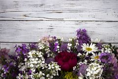 Πολλά διαφορετικά είδη λουλουδιών: phlox, chamomile, peony, κουδούνια στοκ εικόνες