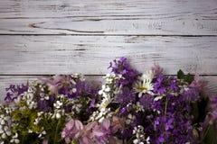 Πολλά διαφορετικά είδη λουλουδιών: phlox, chamomile, peony, κουδούνια στοκ εικόνα με δικαίωμα ελεύθερης χρήσης