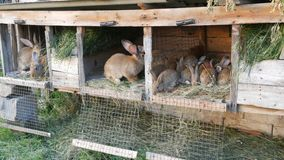 Πολλά διαφορετικά κουνέλια στο κλουβί στο σπίτι καλλιεργούν απόθεμα βίντεο
