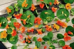 Πολλά επιλεγμένα λουλούδια στο μέρος NH με την αγάπη και τη χαρά για την εποχή Στοκ φωτογραφίες με δικαίωμα ελεύθερης χρήσης