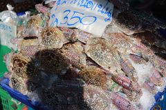 Πολλά καβούρια αναμένουν τις πωλήσεις στη φρέσκια αγορά θαλασσινών στοκ εικόνα