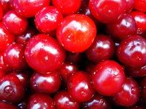 Πολλά κόκκινα κεράσια στη δροσιά στοκ φωτογραφία με δικαίωμα ελεύθερης χρήσης