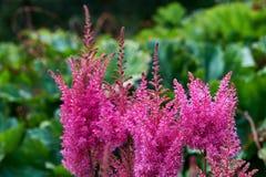 Πολλά κόκκινα λουλούδια στοκ φωτογραφία με δικαίωμα ελεύθερης χρήσης