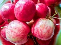 Πολλά μήλα σε ένα πιάτο στοκ εικόνα με δικαίωμα ελεύθερης χρήσης