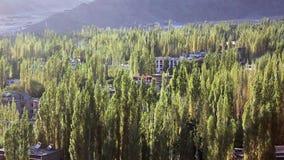 Πολλά πράσινα δέντρα στην πόλη απόθεμα βίντεο
