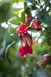 Πολλά ρόδια αυξάνονται στον κήπο στοκ εικόνα με δικαίωμα ελεύθερης χρήσης