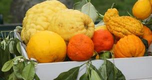 πολλά ώριμα εσπεριδοειδή και λεμόνια που καλλιεργούνται χωρίς φυτοφάρμακο στοκ φωτογραφίες