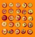 Πολλά ώριμα κόκκινα μήλα Στοκ Φωτογραφίες