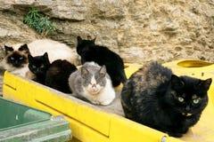 Πολλές άστεγες γάτες στα δοχεία απορριμάτων στην πόλη Στοκ Εικόνες