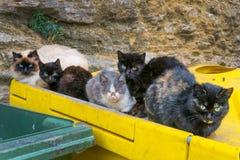 Πολλές άστεγες γάτες στα δοχεία απορριμάτων στην πόλη Στοκ Φωτογραφία