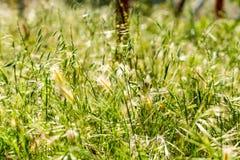 Πολλές ακίδες στον κήπο στοκ φωτογραφίες