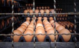 πολλές πλαστικές επιτροπές με τα φρέσκα αυγά στο τέλος του φορτηγού Στοκ φωτογραφία με δικαίωμα ελεύθερης χρήσης