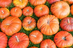 Πολλές πορτοκαλιές κολοκύθες που βλέπουν άνωθεν Στοκ εικόνες με δικαίωμα ελεύθερης χρήσης
