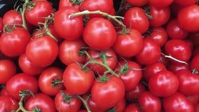 Πολλές τέλειες ντομάτες στη φυτική αγορά Φρέσκες κόκκινες ντομάτες στο στάβλο στην υπεραγορά απόθεμα βίντεο