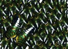 Πολλή πράσινη χρυσή πεταλούδα φτερών πουλιών, υπόβαθρο Danaus Genutia Στοκ Φωτογραφία