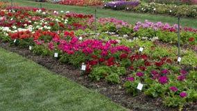 Πολλαπλάσια κρεβάτια λουλουδιών στο δενδρολογικό κήπο του Ντάλλας Στοκ φωτογραφία με δικαίωμα ελεύθερης χρήσης