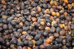 Πολλοί ακατέργαστο betel - καρύδια που περιμένουν να ξεράνει Στοκ Εικόνες