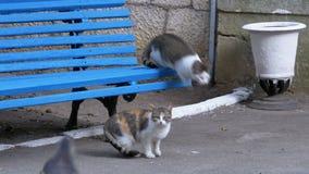 Πολλοί απομακρύνονται γάτες καθμένος κοντά σε έναν πάγκο στο πάρκο φιλμ μικρού μήκους