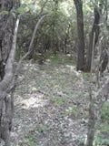 πολλοί κορμοί και κλάδοι δέντρων συνδυάζονται δάσος που ο ουρανός είναι ορατός μέσω των κλάδων δέντρων στοκ εικόνες με δικαίωμα ελεύθερης χρήσης
