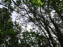 πολλοί κορμοί και κλάδοι δέντρων συνδυάζονται δάσος που ο ουρανός είναι ορατός μέσω των κλάδων δέντρων στοκ φωτογραφία