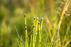 Πολλοί νεαροί βλαστοί όμορφων και πράσινων εγκαταστάσεων Το φυτό αυξάνεται στο χώμα με την υψηλή υγρασία στις μεγάλες ομάδες στοκ εικόνα με δικαίωμα ελεύθερης χρήσης