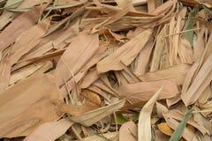 Πολλοί ξεραίνουν τα φύλλα μπαμπού ως υπόβαθρο Στοκ Φωτογραφίες