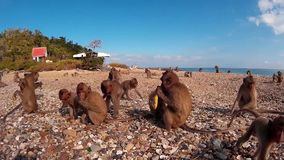Πολλοί πίθηκοι στην ακτή φιλμ μικρού μήκους