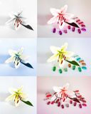 Πολλοί όμορφοι κρίνοι χωρίς υπόβαθρο, κρίνοι λουλουδιών που απομονώνονται στους μεγάλους αριθμούς Στοκ Εικόνες