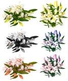 Πολλοί όμορφοι κρίνοι χωρίς υπόβαθρο, κρίνοι λουλουδιών που απομονώνονται στους μεγάλους αριθμούς Στοκ Φωτογραφίες