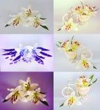 Πολλοί όμορφοι κρίνοι χωρίς υπόβαθρο, κρίνοι λουλουδιών που απομονώνονται στους μεγάλους αριθμούς Στοκ φωτογραφίες με δικαίωμα ελεύθερης χρήσης