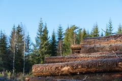 Πολτός ξύλου woodpile σε ένα δάσος στοκ εικόνες