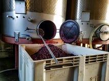 Πολτός σταφυλιών κρασιού στοκ φωτογραφία με δικαίωμα ελεύθερης χρήσης