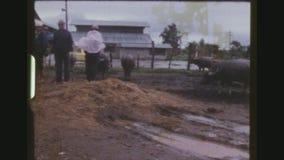 Πολυάσχολη αγορά βοοειδών αγροτών απόθεμα βίντεο