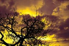 Πολυ χρωματισμένο ηλιοβασίλεμα με τα σύννεφα σκιαγραφιών δέντρων γραμμών και πυρκαγιάς στοκ εικόνα