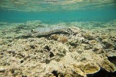 Πολυ χρώμα Angelfish: Νησί Dravuni Στοκ Φωτογραφία