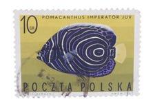 ΠΟΛΩΝΙΑ - CIRCA 1967: Ένα γραμματόσημο που τυπώνεται μέσα, παρουσιάζει ψάρια Imper Στοκ φωτογραφίες με δικαίωμα ελεύθερης χρήσης
