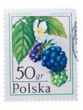 ΠΟΛΩΝΙΑ - CIRCA 1977: Τα βατόμουρα είναι ομάδα ειδών closel Στοκ φωτογραφία με δικαίωμα ελεύθερης χρήσης