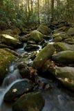 πολύβλαστα δάση καταρρα&ka Στοκ Φωτογραφίες