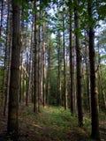 Πολύβλαστα ψηλά πράσινα δέντρα στο καναδικό δάσος Στοκ φωτογραφία με δικαίωμα ελεύθερης χρήσης