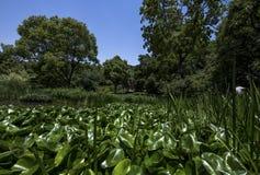 Πολύβλαστη άποψη κήπων κατά τη διάρκεια των ημερών του πρώτου καλοκαιριού στοκ εικόνες με δικαίωμα ελεύθερης χρήσης