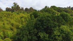 Πολύβλαστη πρασινάδα που καλύπτει τις βουνοπλαγιές του πάρκου, εθνικό άδυτο, που συντηρεί τη φύση απόθεμα βίντεο