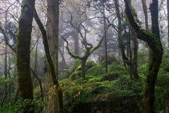 Πολύβλαστο δάσος μετά από τη βροχή στοκ φωτογραφία