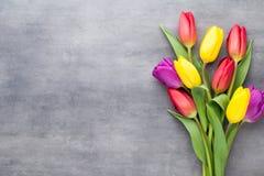 Πολύχρωμα λουλούδια άνοιξη, τουλίπα σε ένα γκρίζο υπόβαθρο στοκ εικόνες